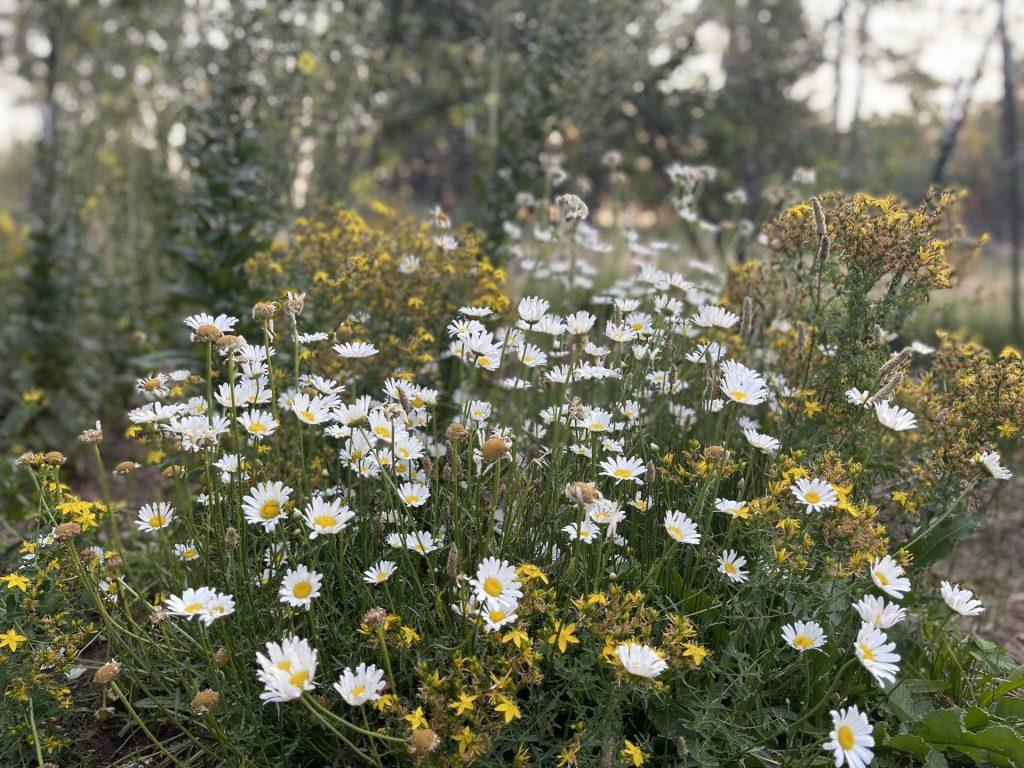 Bee yard bouquet