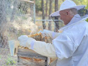 Beehive check