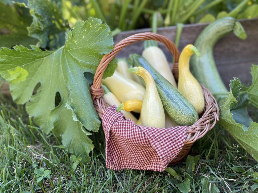 basket of summer squash