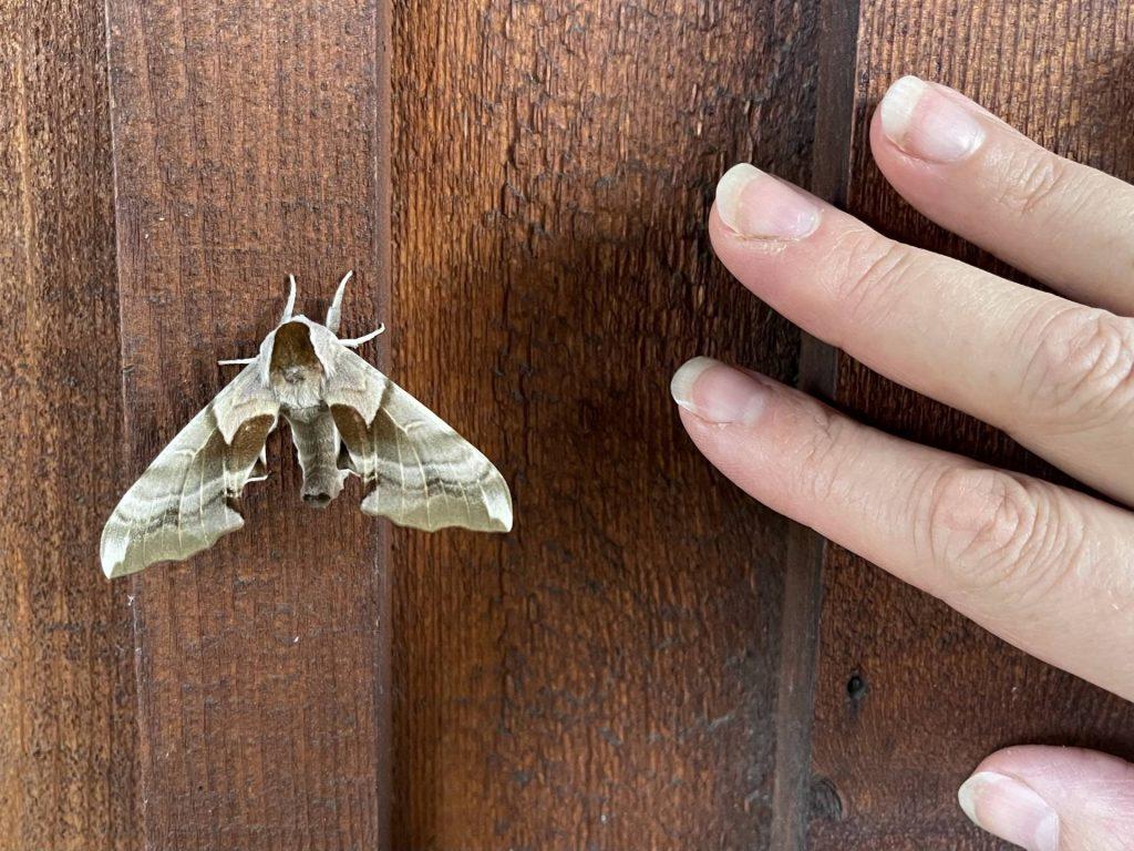 unidentified moth