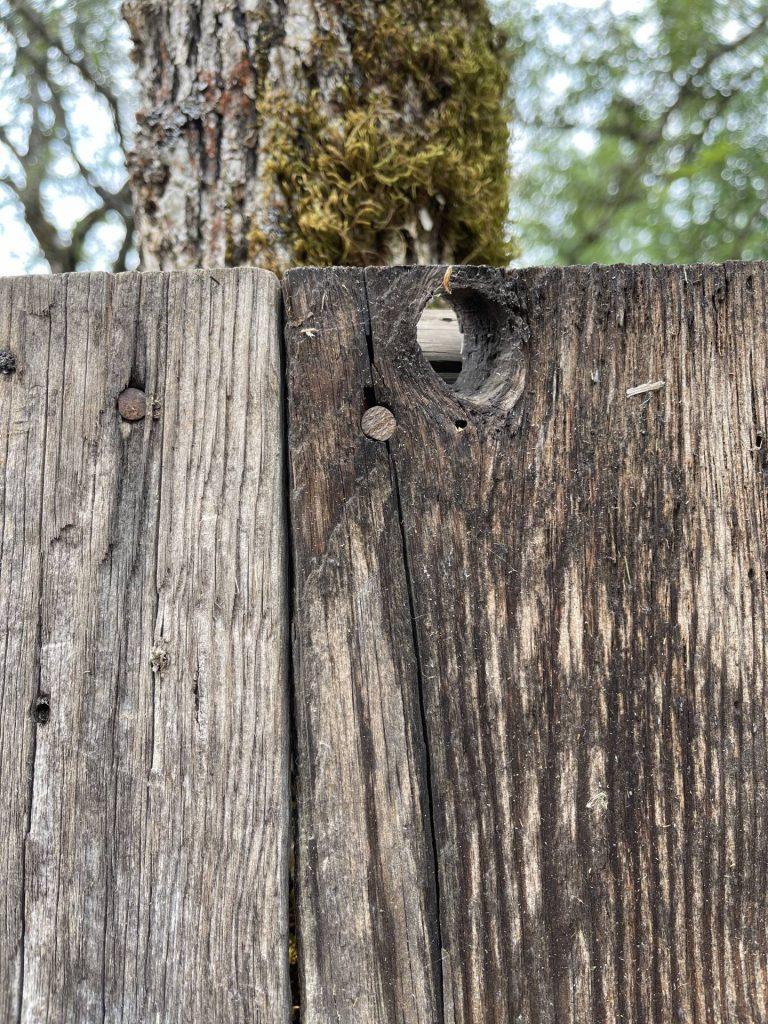 wood shed progress